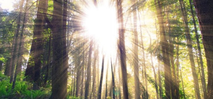 Three Steps to Deepen our Understanding: Part Two